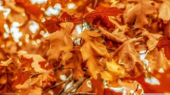 صورة خلفية الخريف